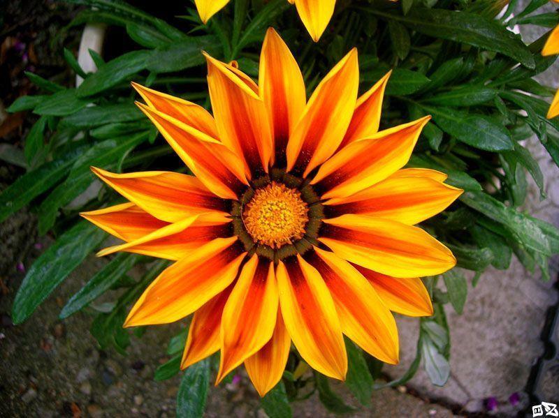 Jolie fleur page 12 - Fleur du soleil ...