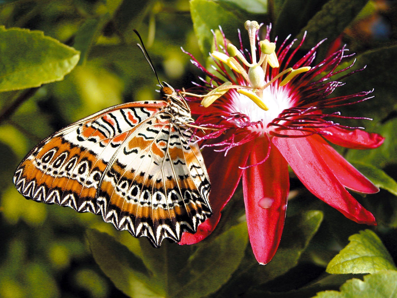 Magnifique papillons page 14 - Papillon fleur ...