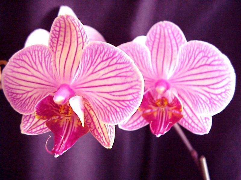 Elegante orchidees for Les plus belles plantes artificielles