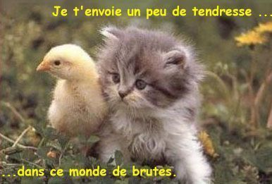 Tendresse en citations